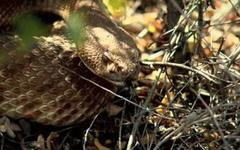 where the wild things are: snake season in san diego county